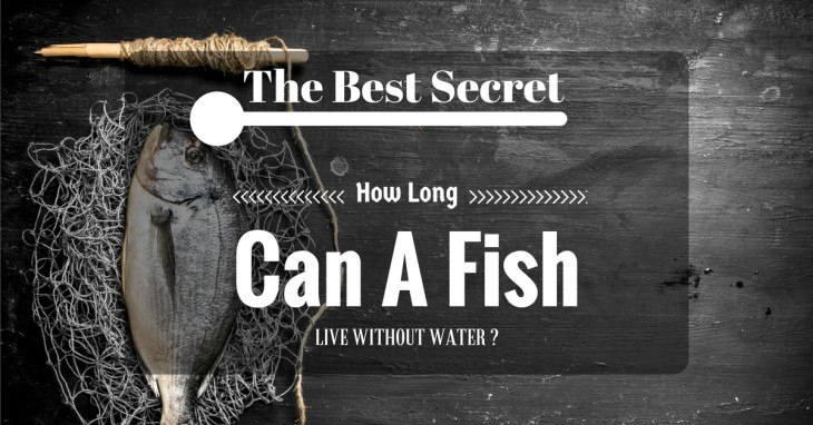 The Best Interesting Secrets About-How Long Can A Fish Live Without Wate