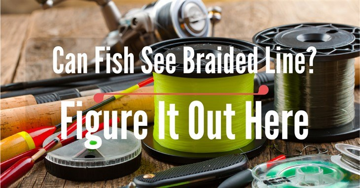 Can Fish See Braided Line- Figure It Out Here
