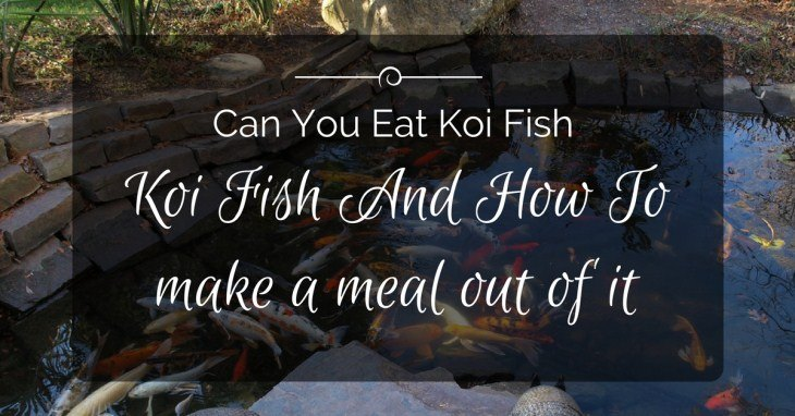 Can you eat koi fish and how to make a meal out of it for Can you eat koi fish