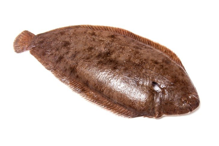 Dover sole-Best Tasting Freshwater Fish