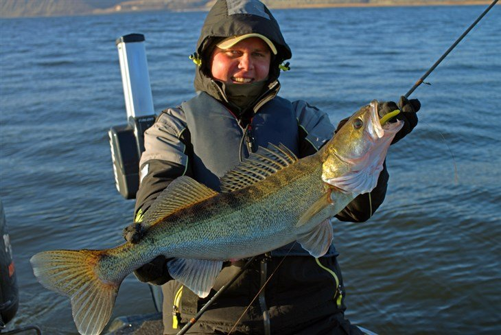 What You Should Know About The Walleye