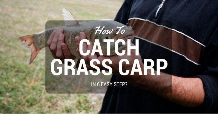 how to catch grass carp