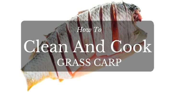 How To Clean And Cook Grass Carp