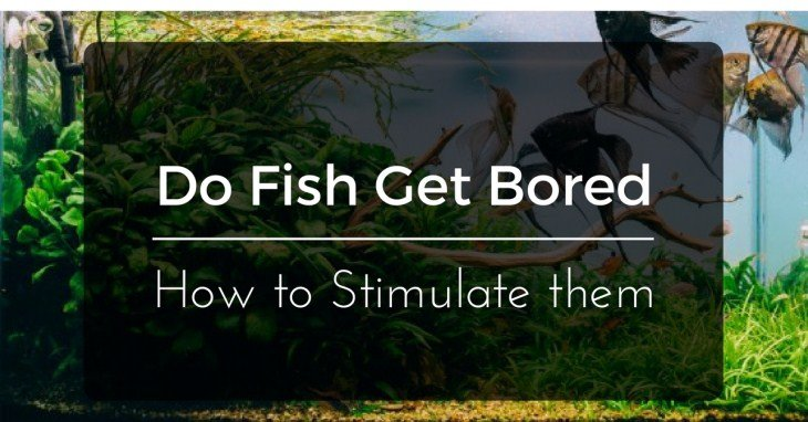 Do Fish Get Bored