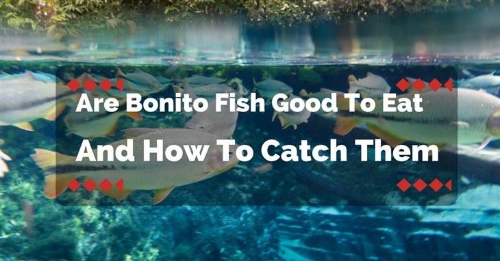 Are Bonito Fish Good To Eat