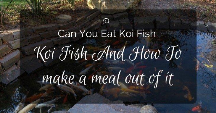 Can You Eat Koi Fish