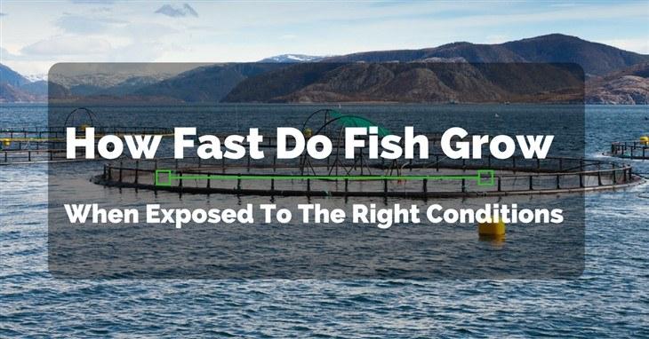 How Fast Do Fish Grow