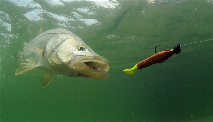 Various Types Of Muskie Lures