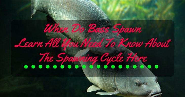 when do bass spawn